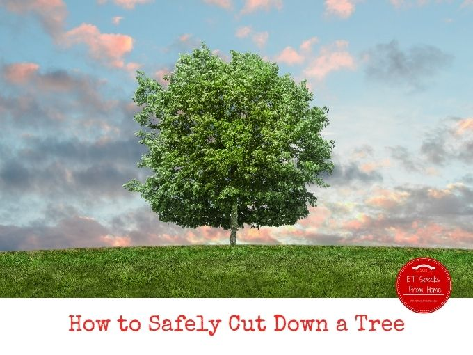How to Safely Cut Down a Tree