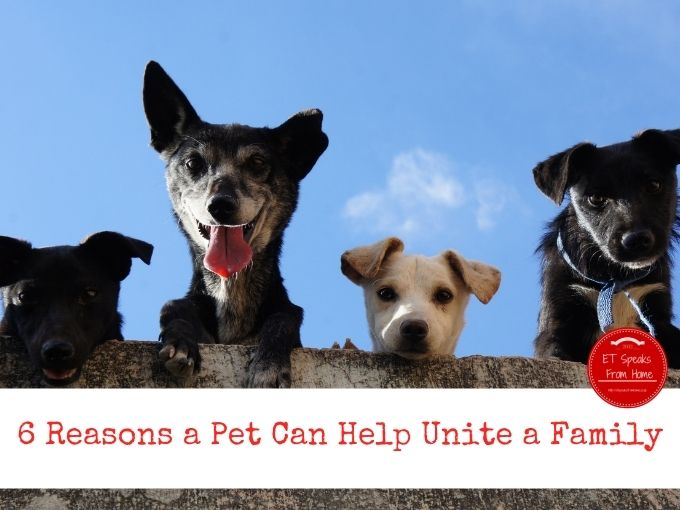 6 Reasons a Pet Can Help Unite a Family