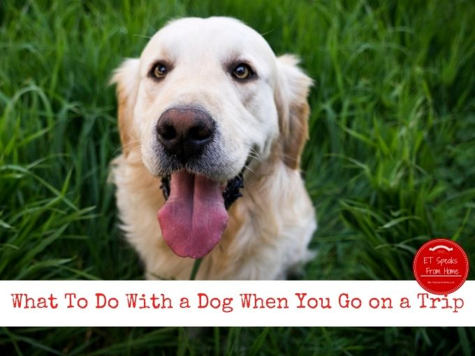 What To Do With a Dog When You Go on a Trip