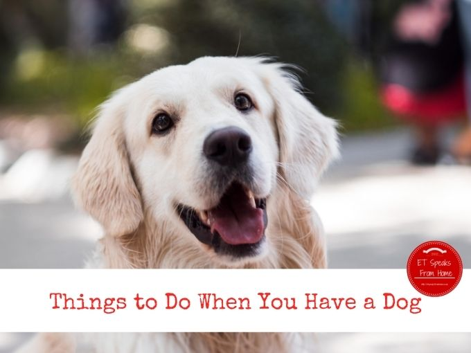 Things to Do When You Have a Dog